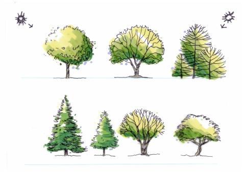 004a_trees_013119a